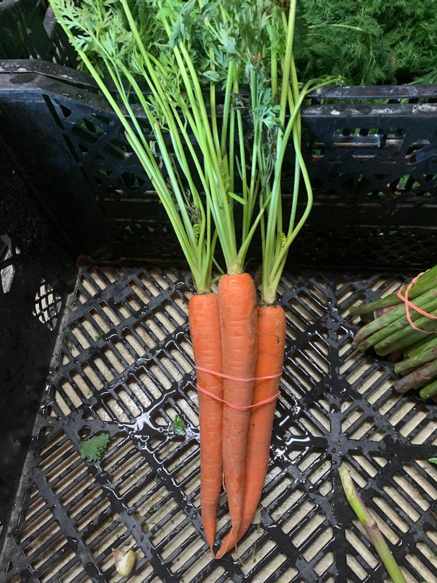 Carrots (1 bunch)