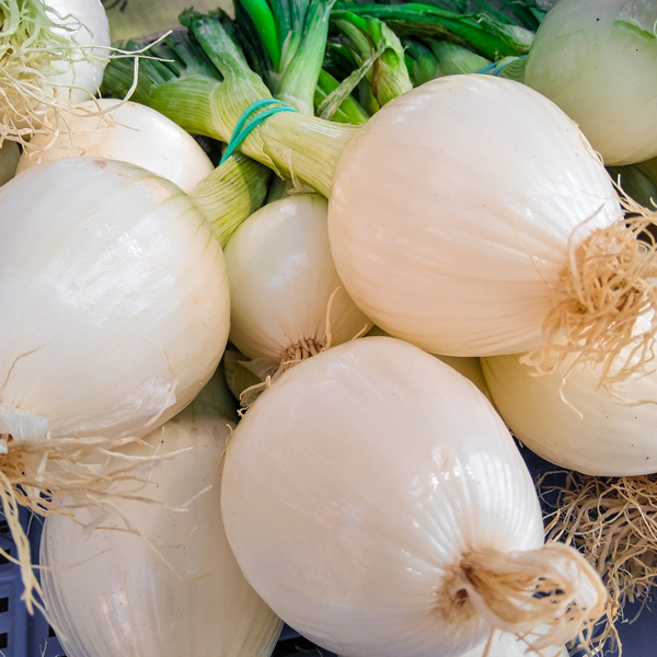 White spring onions bunch
